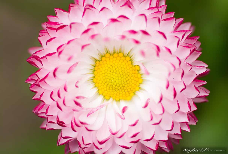 Фотография на цветя