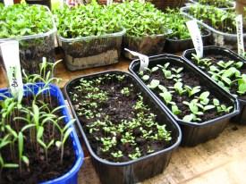 Successful germination
