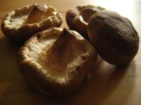 Palm-sized shiitake