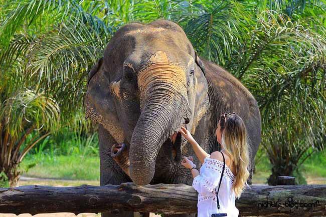 Elefanten Pattaya