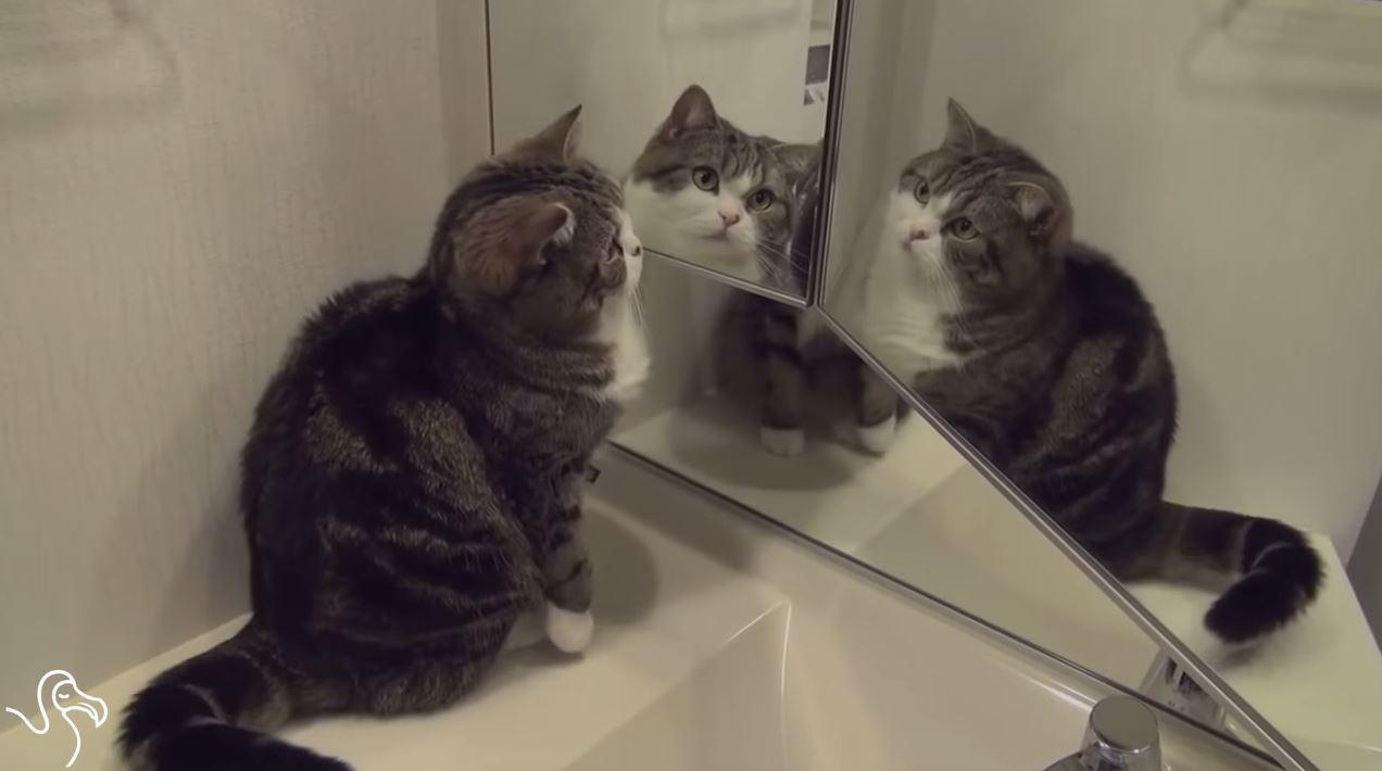 Les Chats Et Les Miroirs Une Histoire Sans Fin Nightlife
