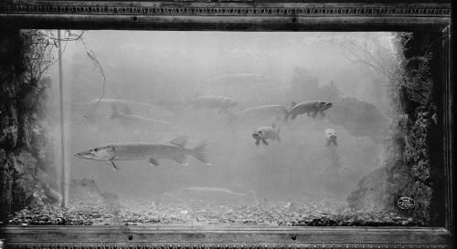 Fish week: The Belle Isle Aquarium - The Night Train