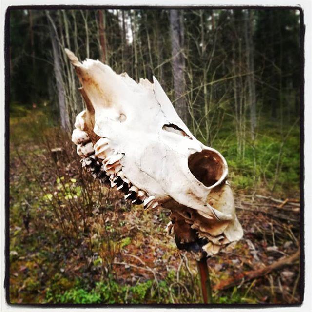 В лесу, на полянке, череп кто-то забыл.