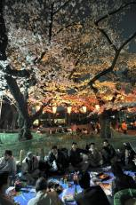 Hanami Party in Ueno Park (source Japan Times)
