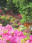 Nezu Shrine Tokyo