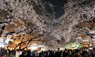 Ueno park at night (Source Japan Times)