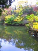 Autumn walk (18)