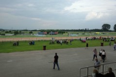 Flutter on the Gee Gees (2)