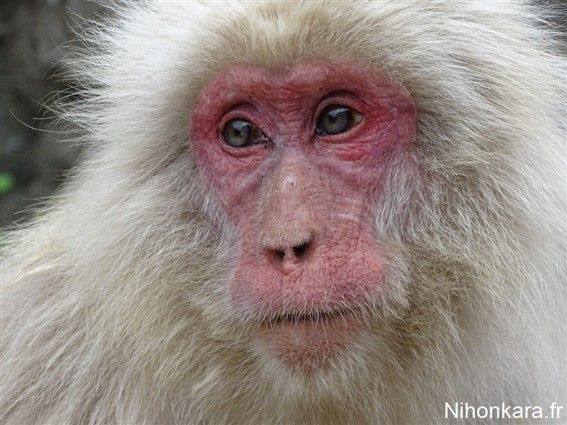 Un très beau singe