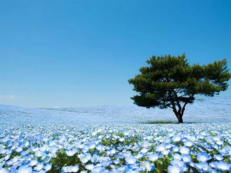 hitachi-seaside-park