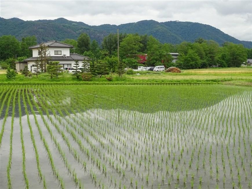 rizières-japonaises