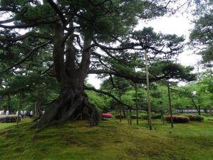 Kenrokuen le jardin japonais
