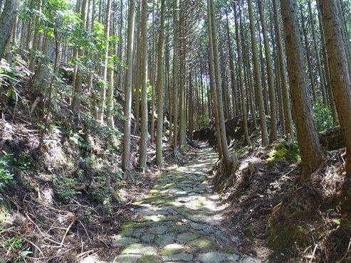 les routes de montagne du Japon