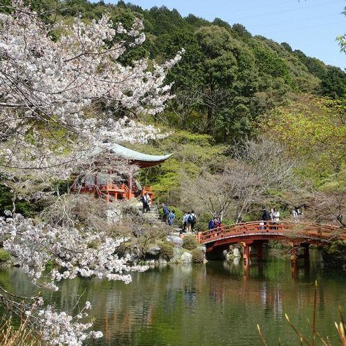 Temple et Sakura