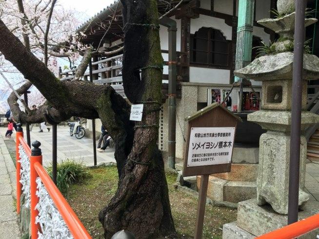 紀三井寺 (26)