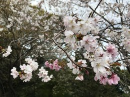 天磐盾 神倉神社 (67) (1024x768)