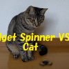 [動画] Fidget Spinner VS Cat