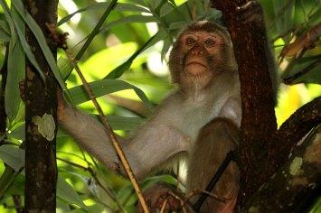 Wildlife at Lawachhara National Park. ©Photo Credit: Jim Wetherall