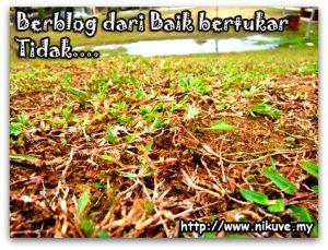 padang_grass