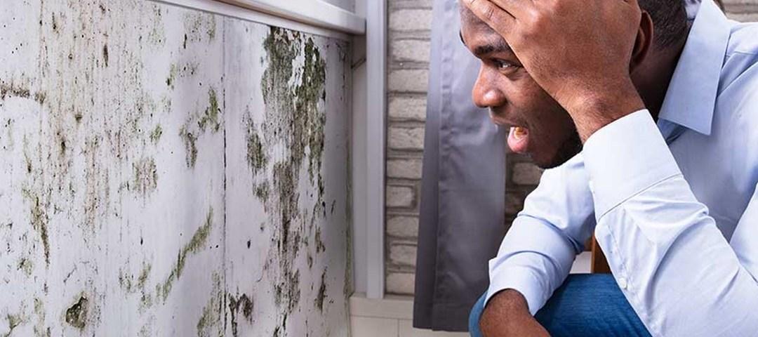 Cara Mengatasi Dinding Lembab