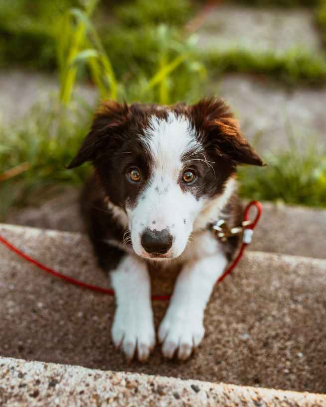 photo of white and brown coated dog