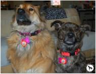 Wag Aware Dog Tags