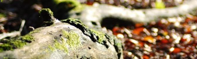 cropped-cropped-dsc_0013s.jpg