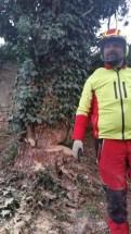Baum (14)