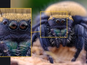 Appena rilasciato: Laowa 65mm f / 2.8 2x Ultra-Macro APO per Nikon Z-mount