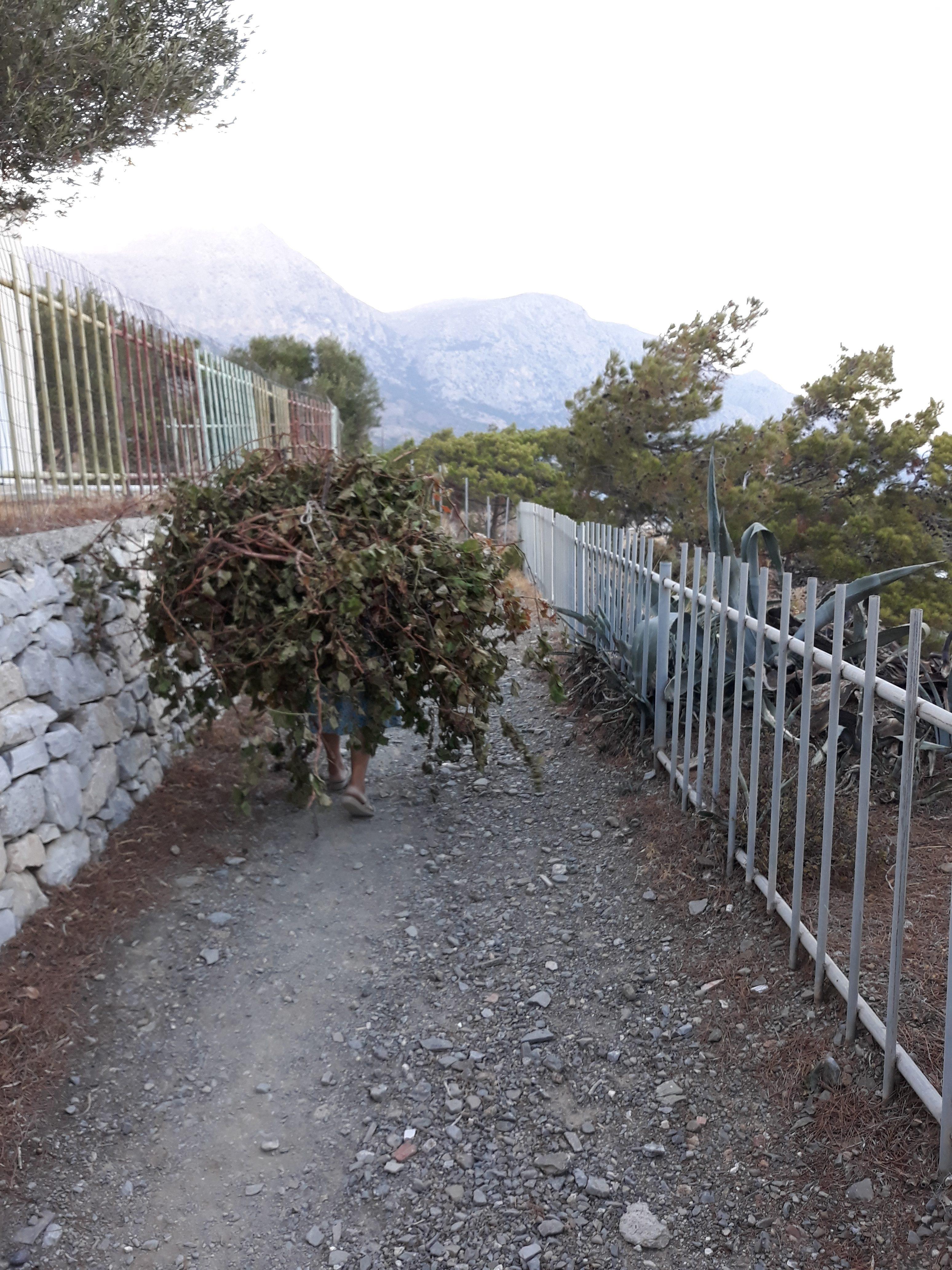 path to Vananda