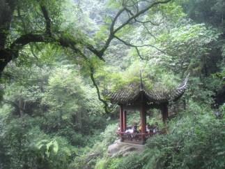 The Bamboo Forest (Shunan Zhuhai National Park (蜀南竹海国家公园))