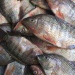 ضبط أكثر من 30 طن لحوم ودواجن وأسماك فاسدة