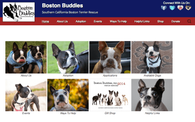 New Website: bostonbuddies.org