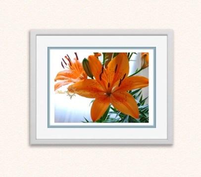 Orange Lily (Lilium Bulbiferum)