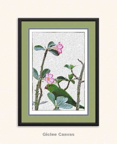 Desert Rose and Parakeet RichGicleeCanvas