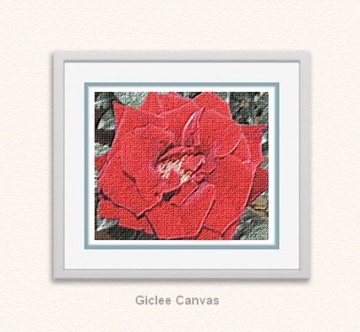 Rose Giclee Canvas