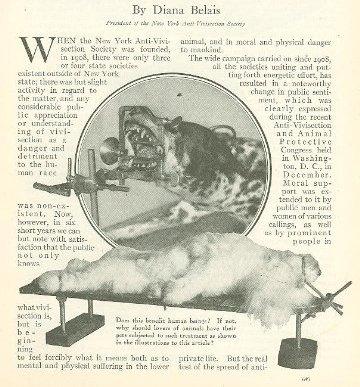כלבים מבותרים ללא הרדמה – מתוך החוברת של דיאנה בלייס