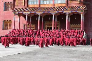 Dzongsar, shedra