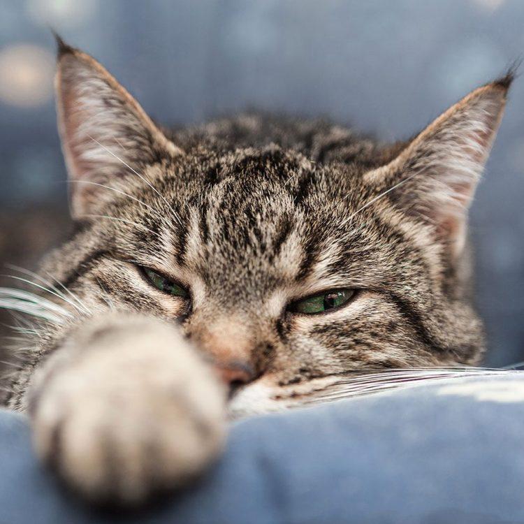 Betreuung und Versorgung Ihrer Katze