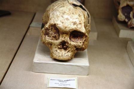 Homo sapiens wajakensis  nimadesriandani