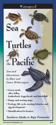 Sea Turtle of the Pacific – Folding Guide
