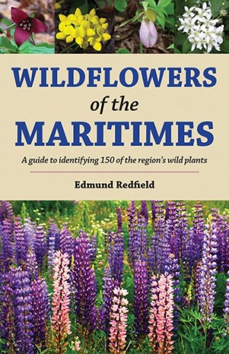 Wildflowers of the Maritimes