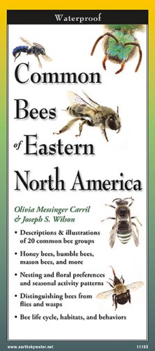 Common Bees of Eastern North America – Folding Guide