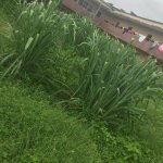 Bushes takes over Uniben students hostel