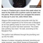 Snake attack man in toilet
