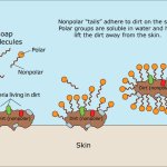 Why does soap work so well on the SARS-CoV-2, the coronavirus and indeed most viruses