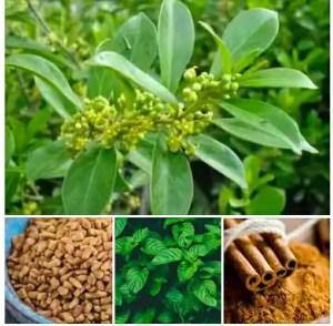 Nigerian herbs for treating diabetes