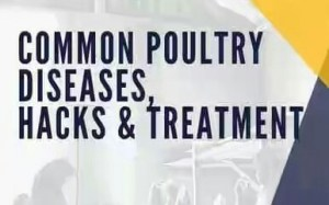 Common Poultry Diseases in Nigeria and Treatment