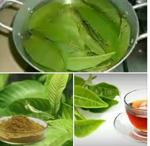 Side Effects + 34 Amazing Health Benefits of Guava Leaves