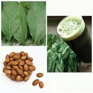 Health benefits of bitter leaf and bitter kola